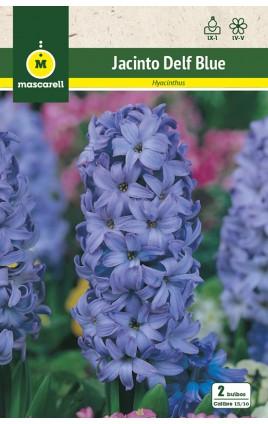 Jacintos Delf Blue