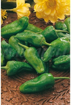 PEPPER PADRON