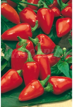 PEPPER PIQUILLO