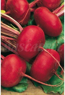 BEETROOT D´EGYPTE