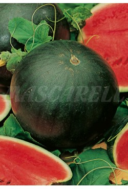 WATERMELON FLORIDA GIANT