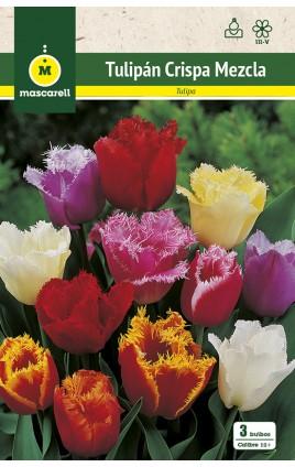 Tulipan Crispa Mezcla de Colores