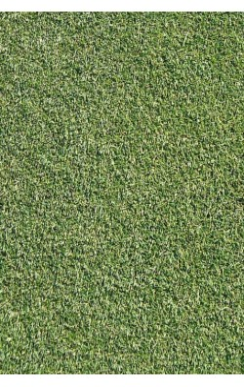 Agrostis stolonifera - Penncross