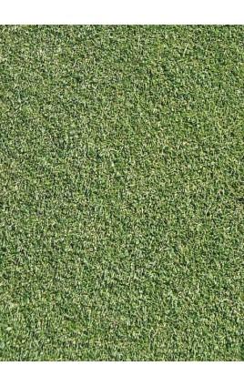 Agrostis tenuis - Highland