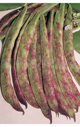 Bean Buenos Aires Roja Sel. TRIANA