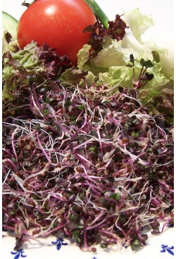 SPROUTS RED CABBAGE