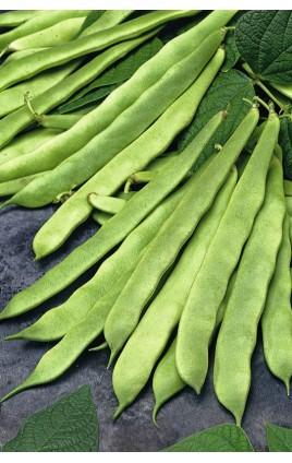 Bean MENDOZA