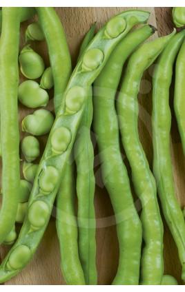 bROAD Bean Muchamiel Sel. LINDA
