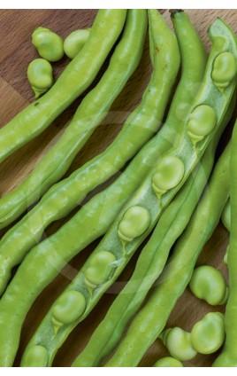 Bean Valenciana Sel. AITANA