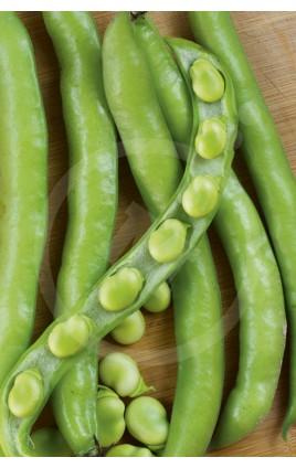Bean Supersimonia Sel. MEDINA