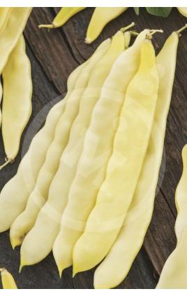 Bean CAPITANO