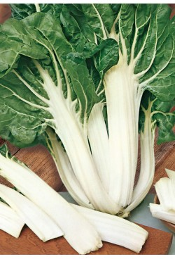 SWISS CHARD WHITE STEM