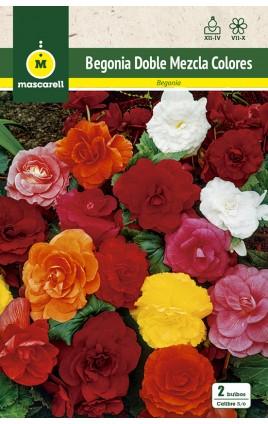 Begonia Doble Mezcla de Colores
