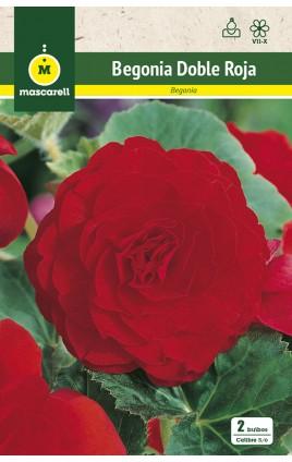 Begonia Doble Roja