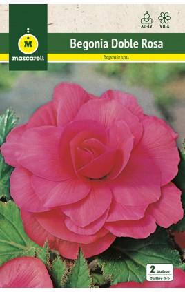 Begonia Doble Rosa