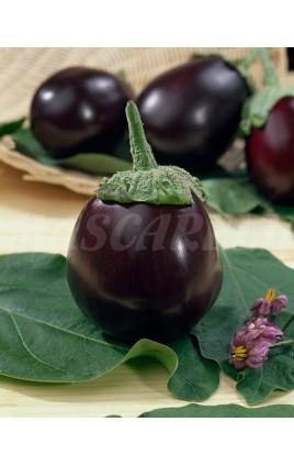 Eggplant BONICA F1