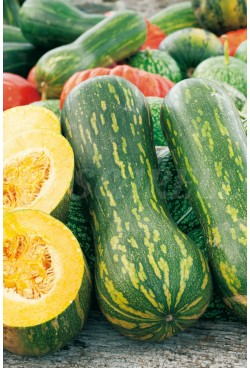 COURGE DOUCE NAPOLITAINE
