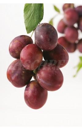 Ciruelo Fresa - Methley Planta 2 Años