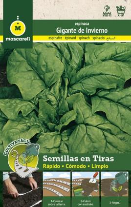 Spinach Gigante Invierno - STRIP 5 m